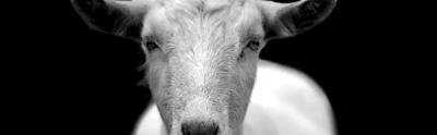goat-970x300